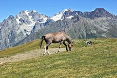 Horse grazing on a background of mountains Stock Images
