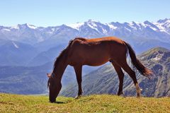 Horse grazing on a background of mountains Royalty Free Stock Photos