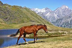Horse grazing on a background of mountains Stock Image