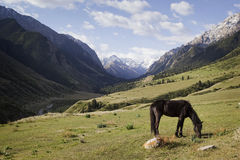 Horse grazing in the background mountains, Kyrgyzstan Royalty Free Stock Photo