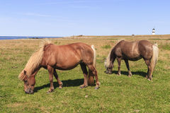 Horse grazing bye the sea Royalty Free Stock Photography