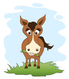 Horse grazing cartoon Royalty Free Stock Photos