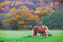 Horse grazing in countryside Stock Image