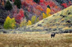 Horse Grazing in Fall Stock Images