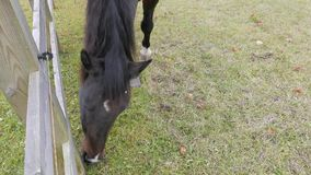 Horse grazing in farm stock video footage