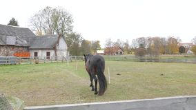 Horse grazing in farm stock footage