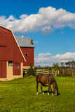 Horse grazing in farm field Stock Photos