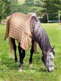 Horse grazing in field stock photo