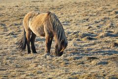 Horse grazing on a field Stock Photography