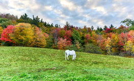 Horse Grazing in a Field Royalty Free Stock Photography