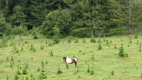 Horse grazing on field stock video footage