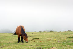 Horse grazing in the fog Royalty Free Stock Photography