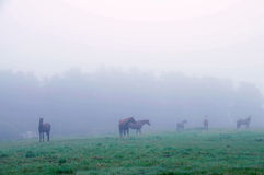 A horse grazing  in the fog. Royalty Free Stock Photo
