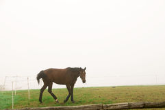 A horse grazing  in the fog. Stock Photo