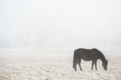 Horse grazing in foggy field Royalty Free Stock Photos