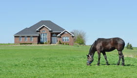 Horse grazing in front yard Royalty Free Stock Image