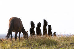 Horse grazing in frotn of moais. In Easter Island stock image