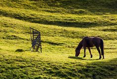 Horse grazing on the gassy hillside. Lovely scenery on farm outdoor Stock Photo