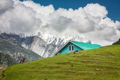 A horse grazing on the golden meadow of Sonamarg. A single horse grazing near a teal colored house on the picturesque meadow of Sonamarg with Thajiwas glacier in Royalty Free Stock Image
