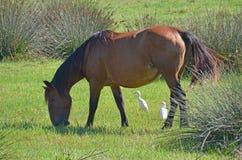 Horse grazing grass counter light Stock Photo