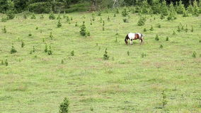 Horse grazing grass stock video footage