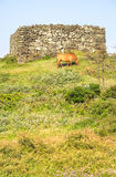 Horse grazing on a grass pasture. On Seopjikoji, Jeju Island Royalty Free Stock Images