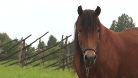 Horse grazing on a green field.  stock video footage