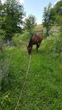 Horse grazing Royalty Free Stock Image