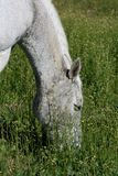 Horse grazing on green pasture Stock Photo