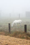 Horse grazing in a heavy mist Royalty Free Stock Photos