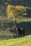 Horse grazing on a hill Stock Photos