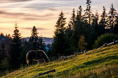 Horse grazing on hillside in forest at sunset Royalty Free Stock Images