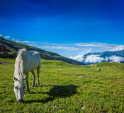 Horse grazing in Himalayas Royalty Free Stock Photography