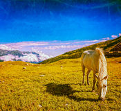 Horse grazing in Himalayas Royalty Free Stock Image