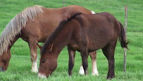 Horse Grazing, Horses, Farm Animals