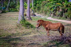 Horse grazing in lush green pasture Royalty Free Stock Images