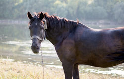 Horse grazing Stock Image