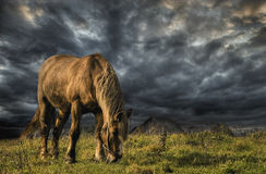A horse grazing on a meadow. In the storm Royalty Free Stock Image