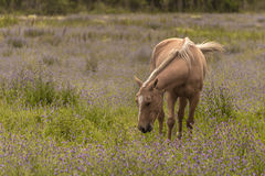 Horse grazing. In the meadow Stock Photo