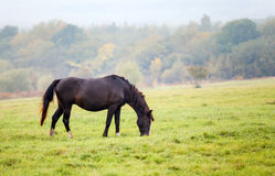 Horse grazing in a meadow Stock Photo