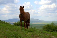 Horse grazing on meadow Royalty Free Stock Images