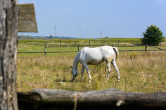 Horse grazing in meadow Stock Photo
