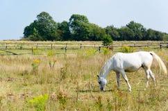 Horse grazing in meadow Stock Photos