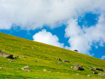 Horse grazing in a mountain meadow Stock Photography