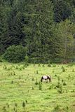 Horse grazing on a mountain Royalty Free Stock Photo