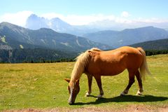 Horse grazing in the mountains Stock Photo