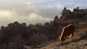 Horse grazing in the mountains on a cloudy sky background stock video