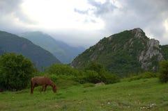 Horse grazing on mountains Stock Photos