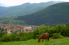 Horse grazing in the mountains. Picture taken on May 6th,2014,near Krichim town,Bulgaria Royalty Free Stock Images