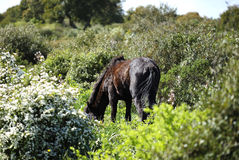 Horse Grazing Stock Photos